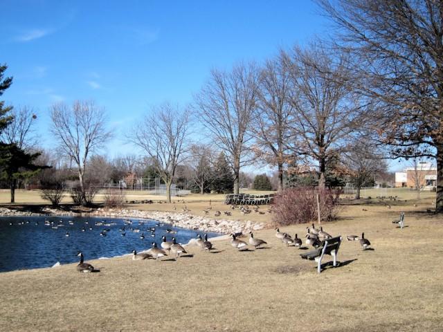 Morrison Park Coralville January 2012